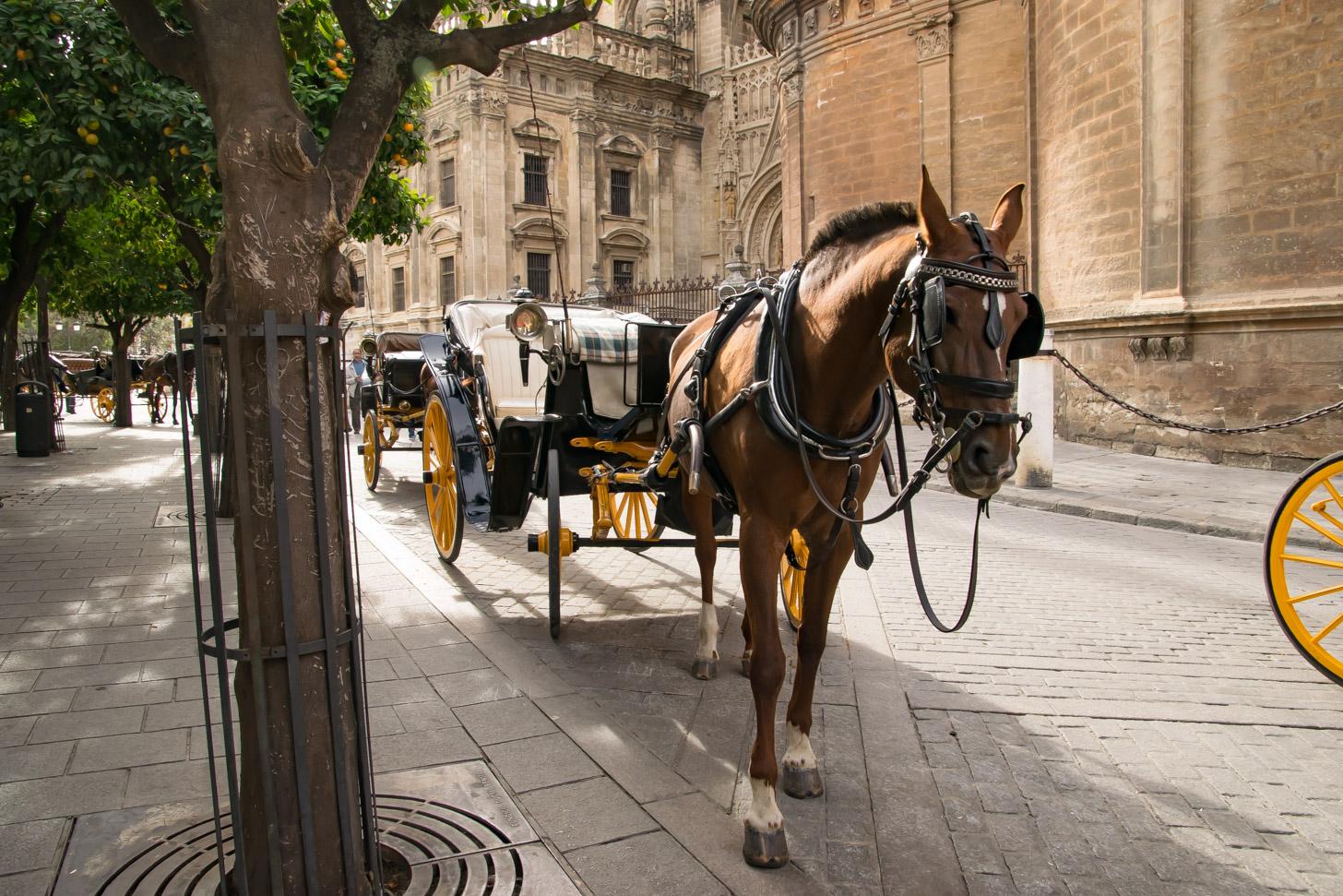 één van de vele paardenkoetsen in Sevilla